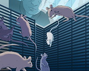 Mice floating in the air as a researcher looks down on them