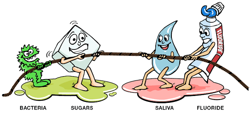 Illustration: Tug of War Between Bacteria and Sugars Versus Saliva and Fluoride