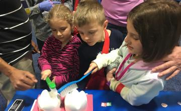Children use large toothbrushes to clean large plastic teeth