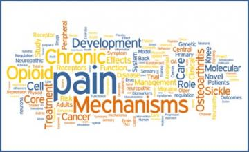 Pain Research Word Cluster