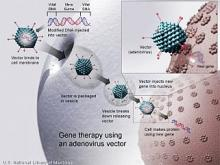 illustration: gene therapy using an adenovirus vector